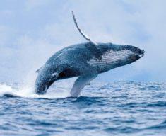 Galeries – Les Baleines