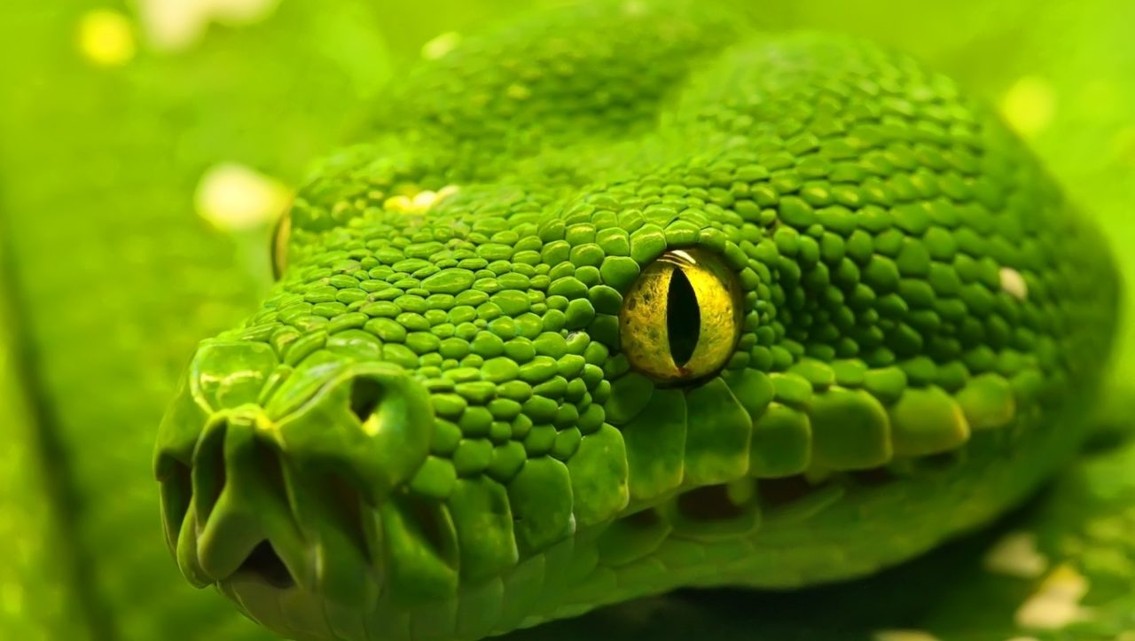 Green Snake – Most Beautiful Picture