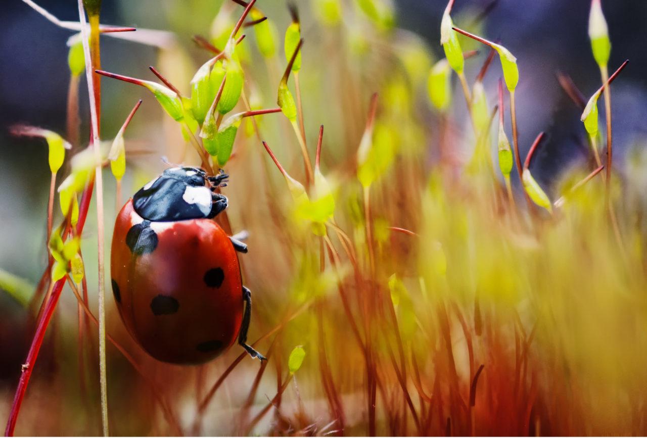 Ladybird in fiery verdure – Most Beautiful Picture