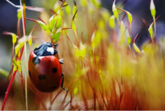 Ladybird in fiery verdure – Most Beautiful Picture