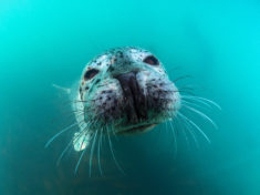 Portrait of a seal – Most Beautiful Picture