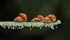 Sex Party of Bugs