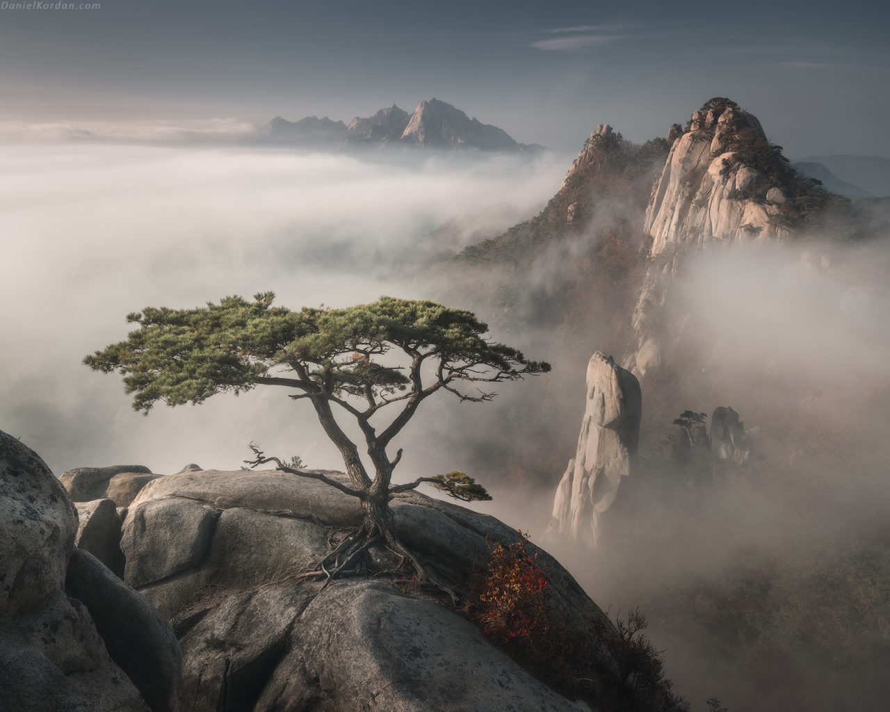 Bonzai, Korea – Most Beautiful Picture