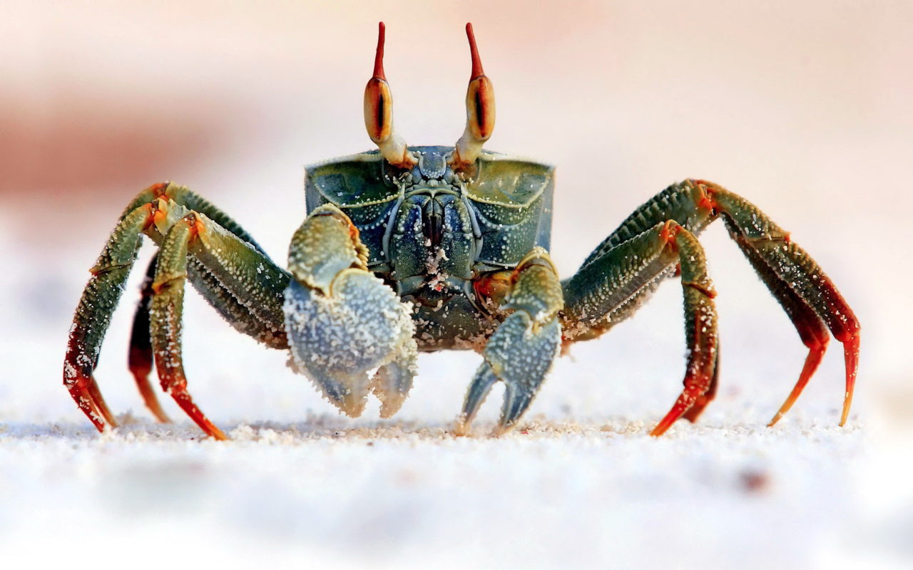 Crab – Most Beautiful Picture