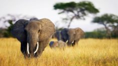 Elephants – Most Beautiful Picture