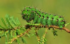 Green caterpillar – Most Beautiful Picture