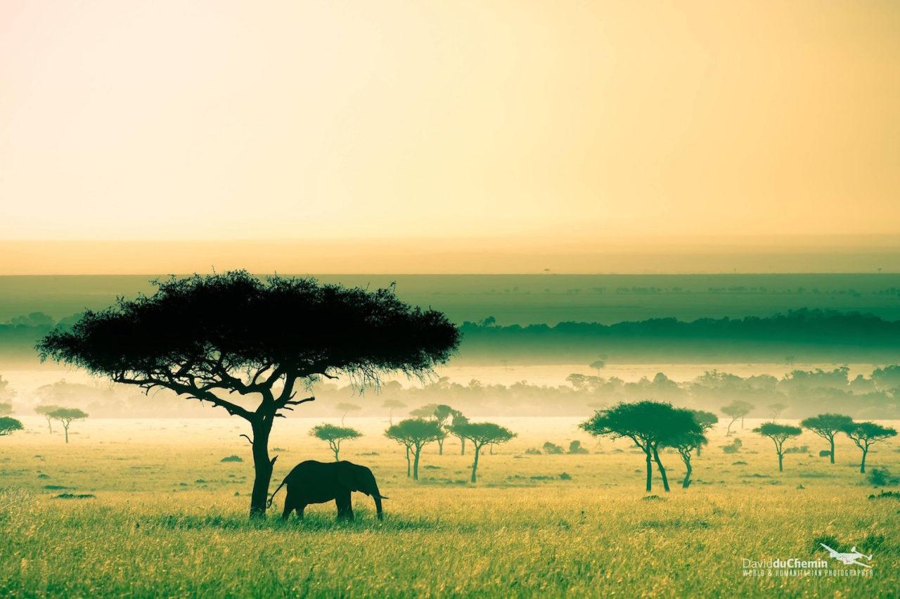 Kenya : +10 millions d'habitants en 10 ans • PopulationData.net