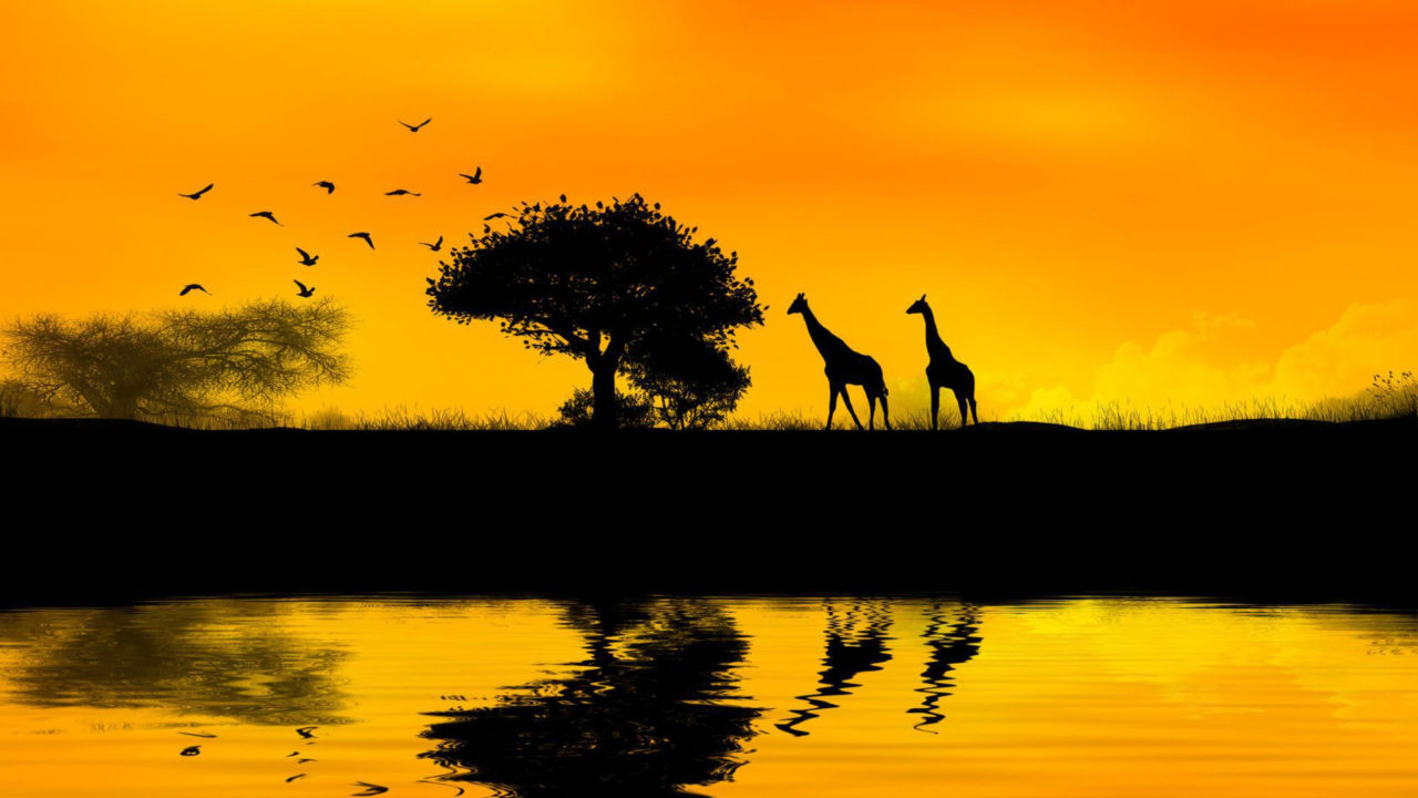 Giraffes, Africa – Most Beautiful Picture
