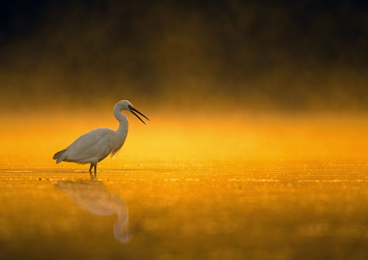 Bird – Most Beautiful Picture