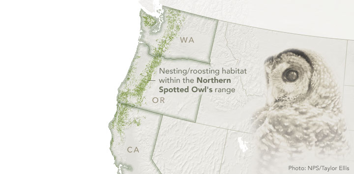 Spotting the Spotted Owl: 30 Years of Habitat Change | MapsRoom