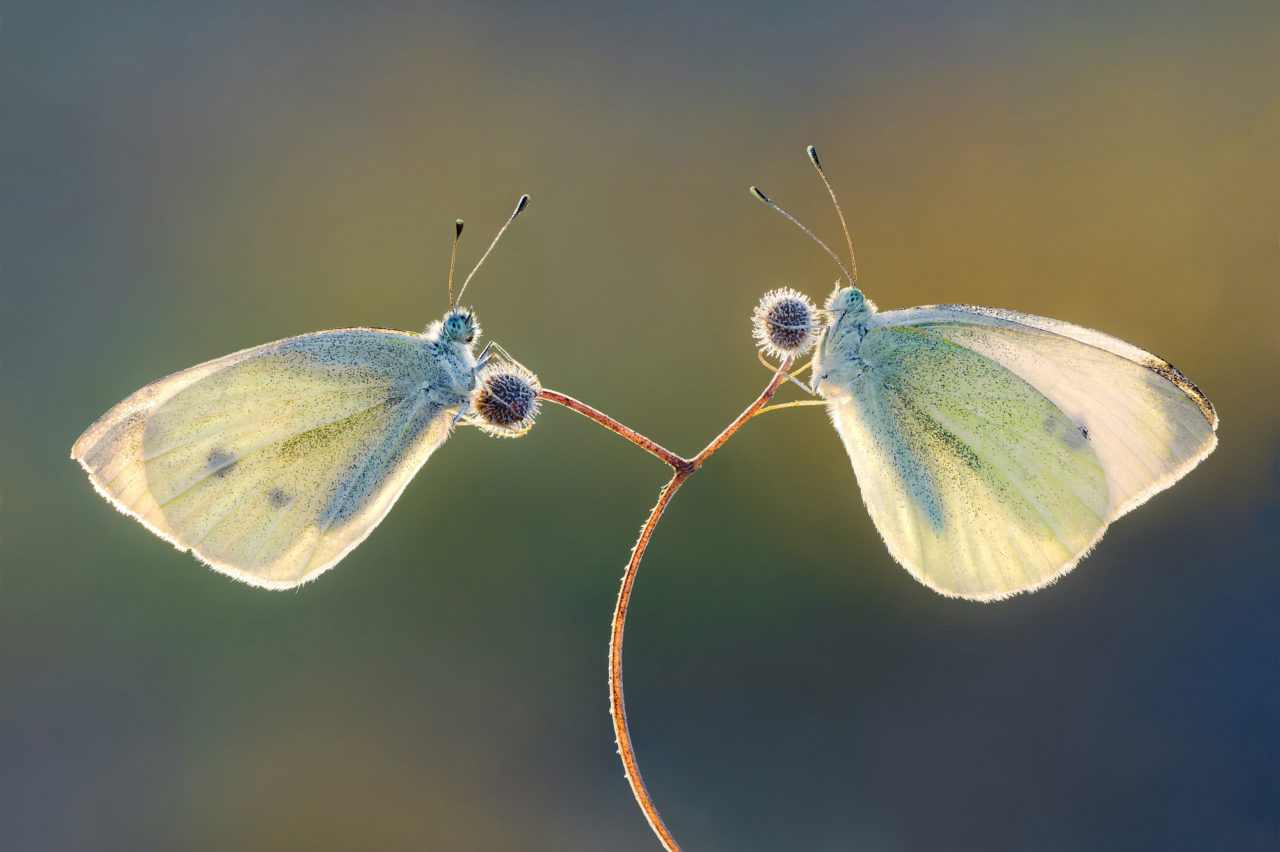 Butterflies – Most Beautiful Picture