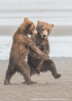 Dancing with the bears – Most Beautiful Picture