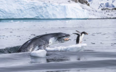 Seal attack – Most Beautiful Picture