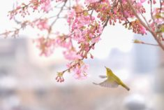 Spring bird – Most Beautiful Picture