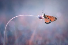 Butterfly on the bent flower – Most Beautiful Picture