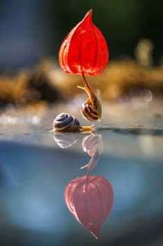 Snails playing with a flower