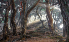 Sacred pine forest, South Korea – Most Beautiful Picture