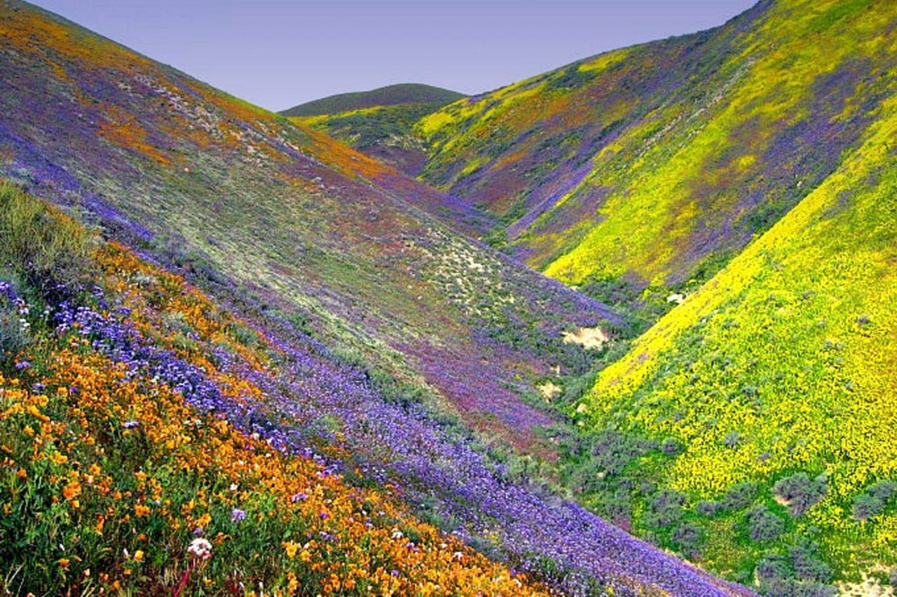 Valley of flowers, Uttarakhand, India – Most Beautiful Picture
