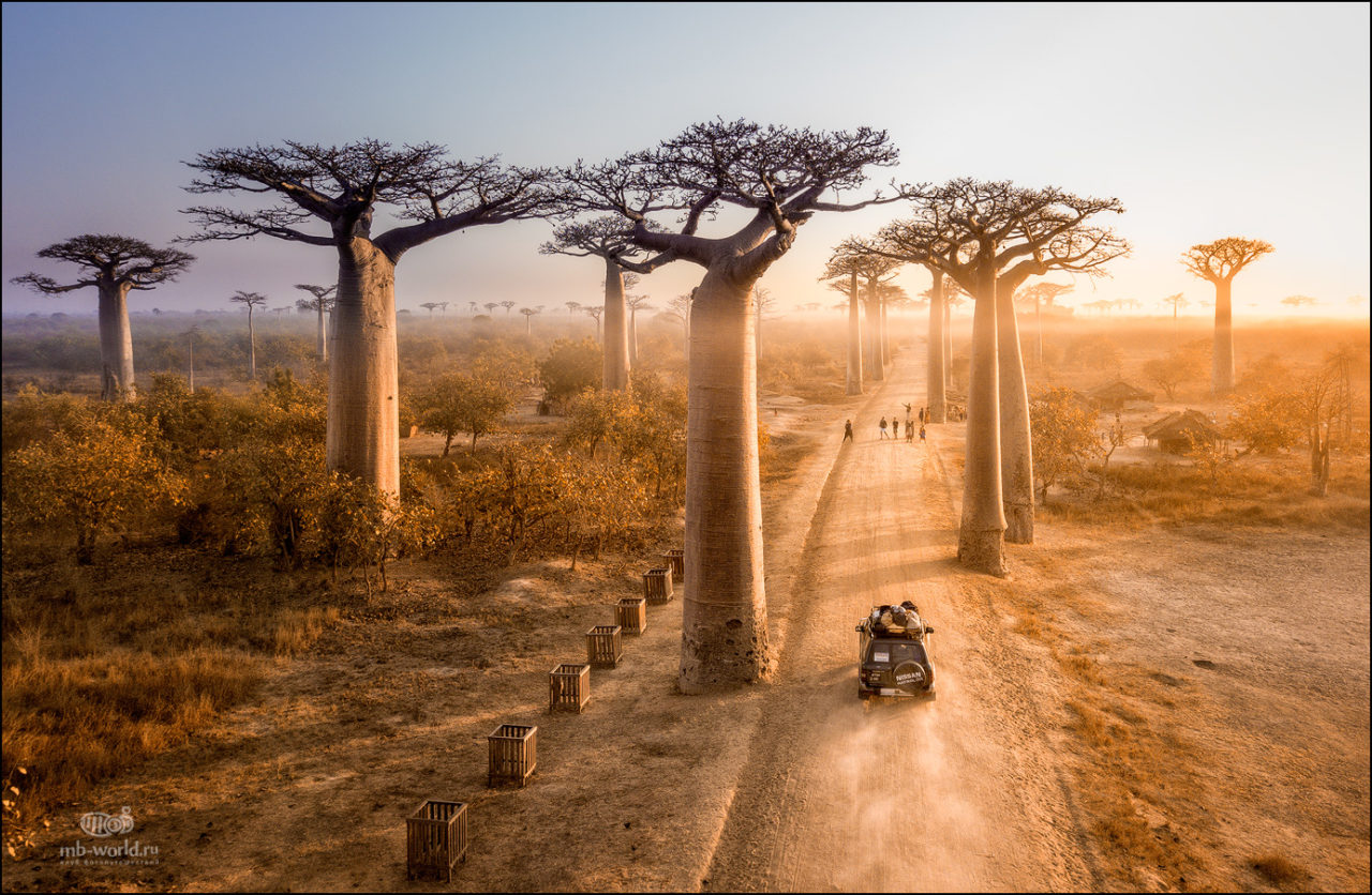 Baobab Alley, Madagascar – Most Beautiful Picture
