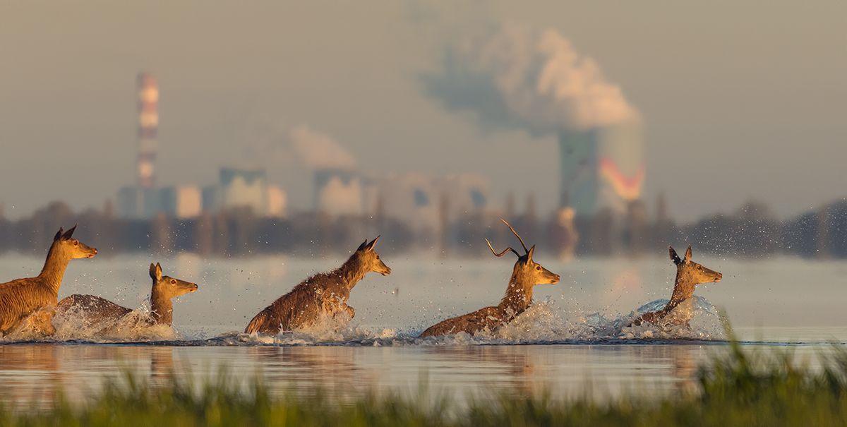Industrial wildlife