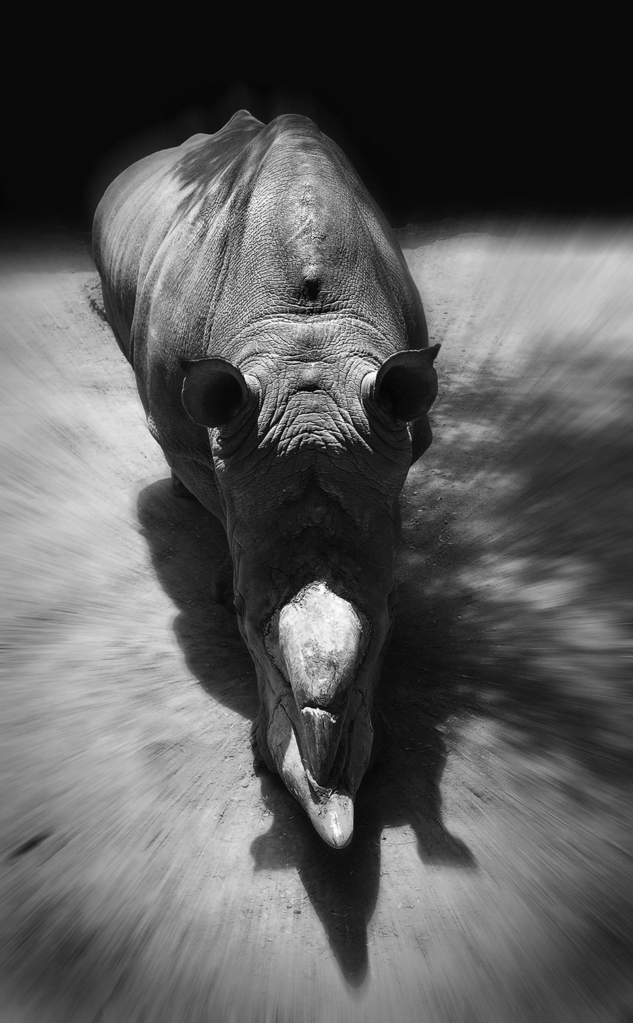 Rhinoceros – Most Beautiful Picture