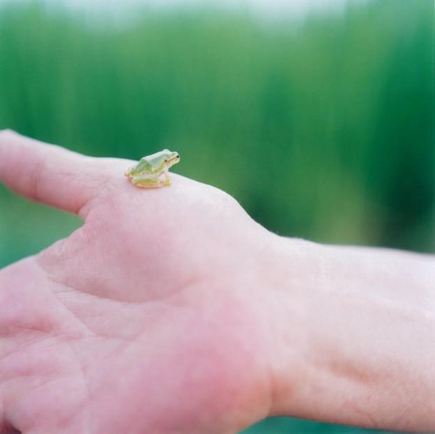Rinko Kawauchi, Photographer | ArtyPin
