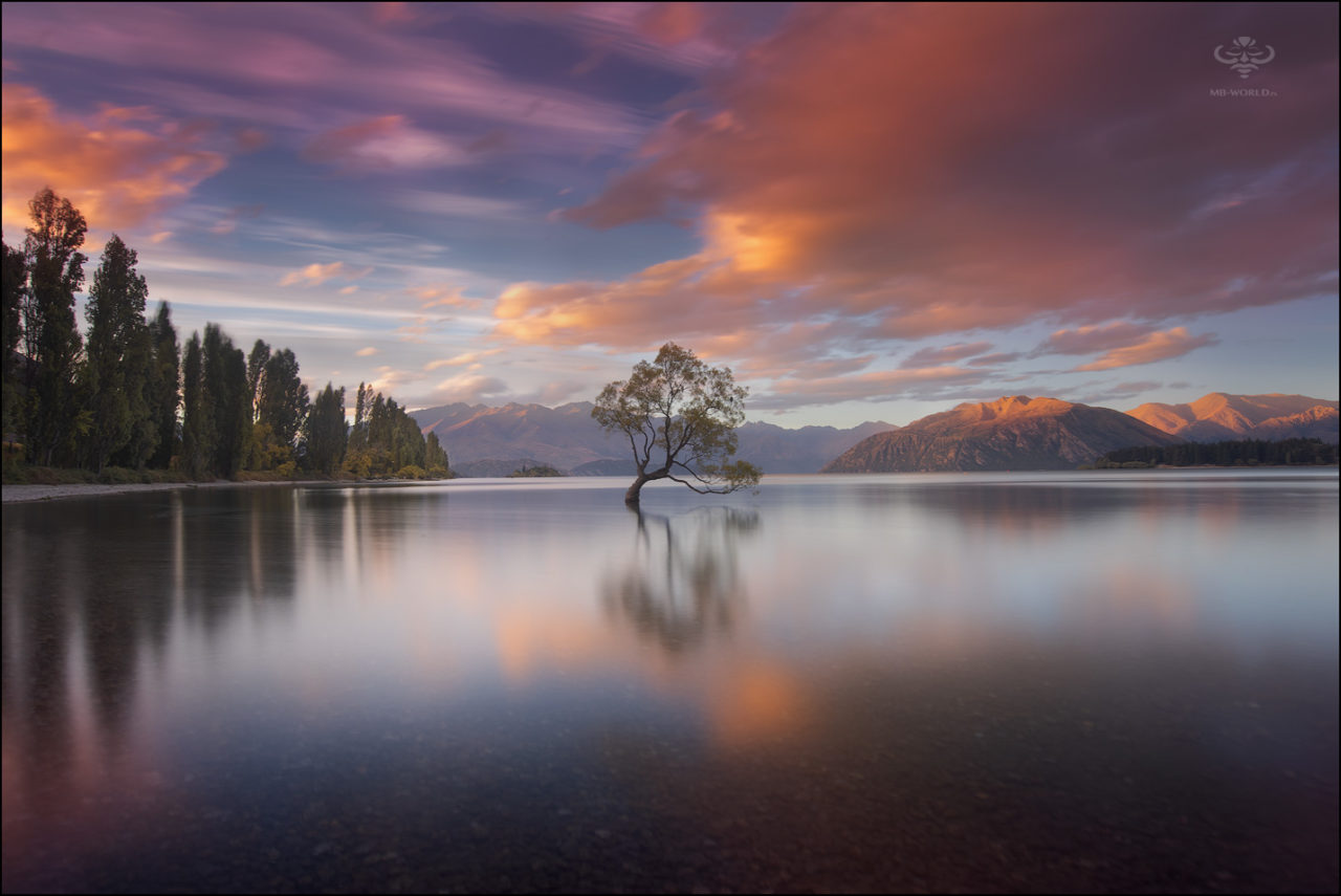 Tree, New Zealand – Most Beautiful Picture
