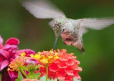 Lantana Flowers | LoveToKnow