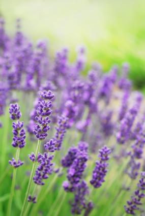 List of Summer Flowers | LoveToKnow