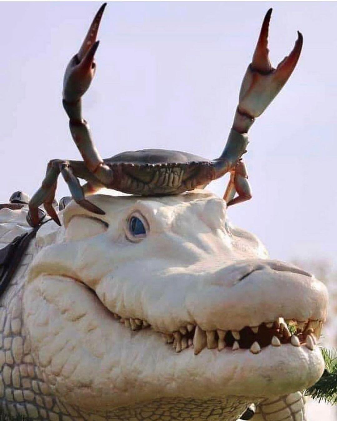 Alligator statue in Morgan City, Louisiana | ArtyPin