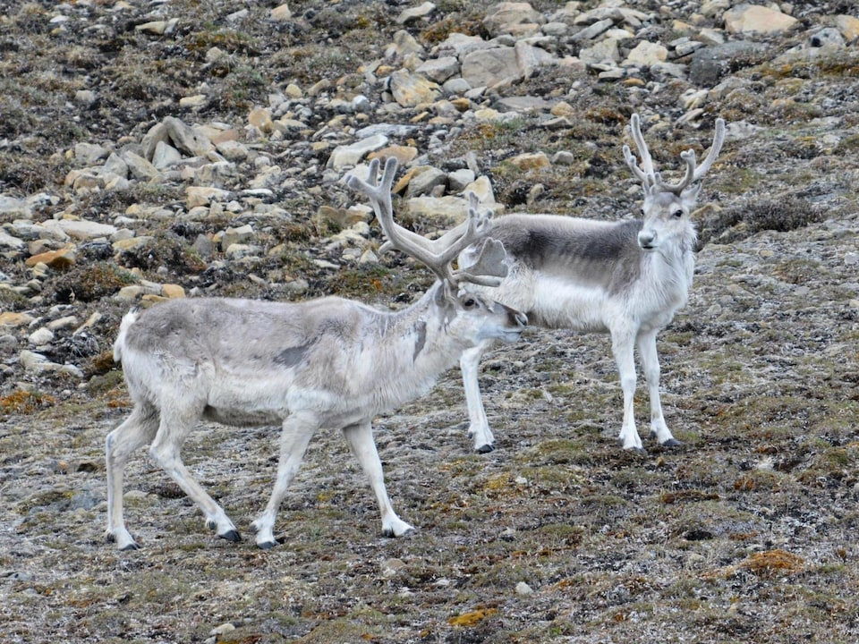 Ces espèces canadiennes qui ne se trouvent nulle part ailleurs sur Terre | Radio-Canada.ca