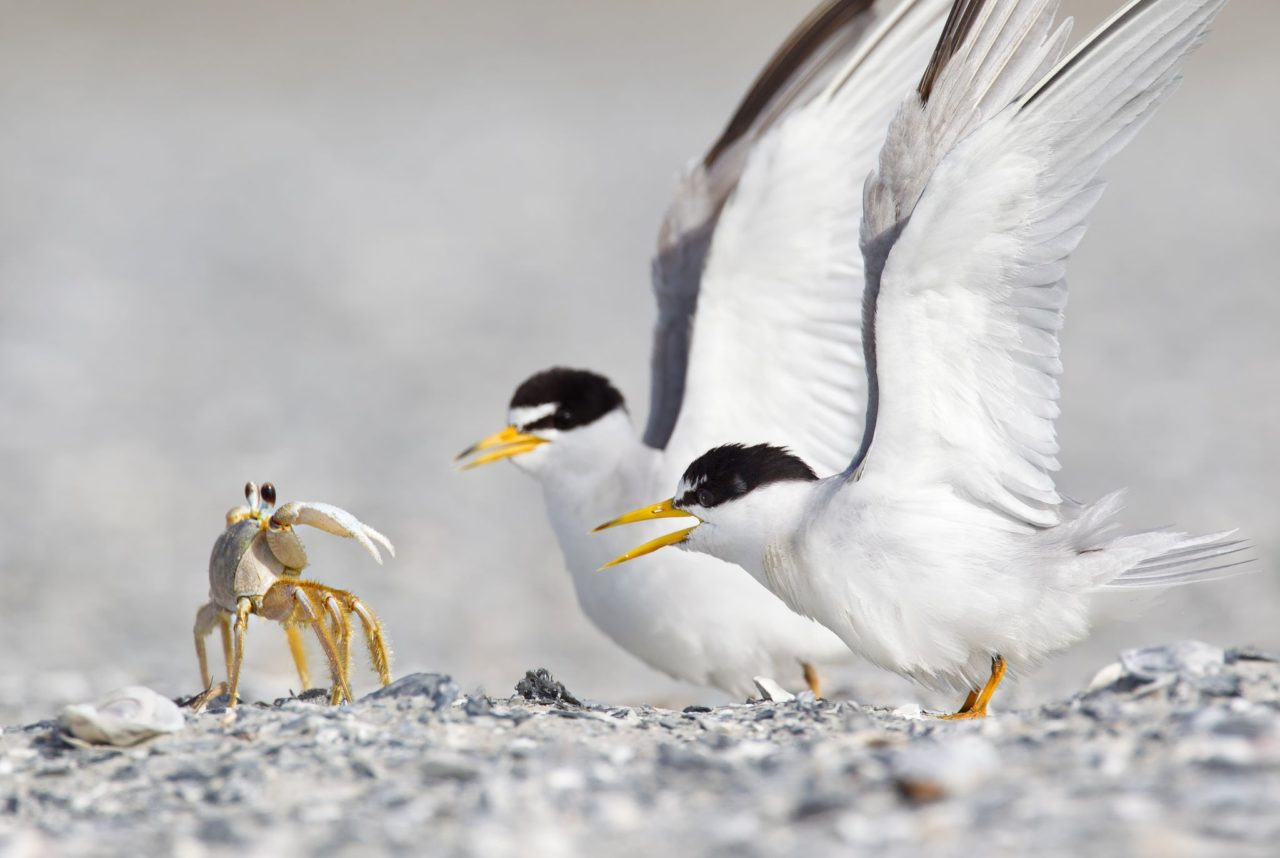 Crab and birds – Most Beautiful Picture