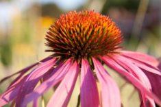 Deer Resistant Perennials | LoveToKnow