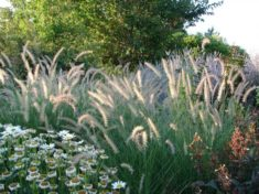 Ornamental Grasses | LoveToKnow