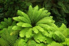 Tree Fern | LoveToKnow