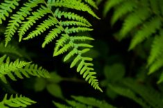 Types of Ferns | LoveToKnow