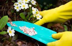 When to Fertilize Your Flower and Vegetable Gardens | LoveToKnow