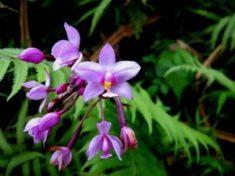Wild Orchids | LoveToKnow