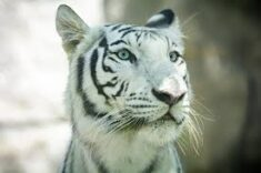 Jedes wilde Tier ist in der Kindheit eine süße kleine Katze