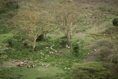 Plan to fence off Nairobi national park angers Maasai and conservationists | Environment | The G ...