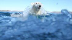 Le Cirque Éloize présente Sous les glaces , une exposition sur l'Arctique canadien | Radio-Canada.ca