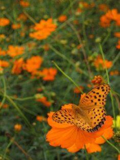 Fall Butterfly Flowers | LoveToKnow